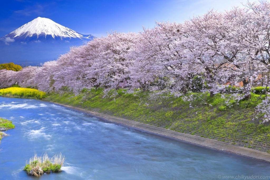 龍巌淵の桜と富士山 | 地球の撮...